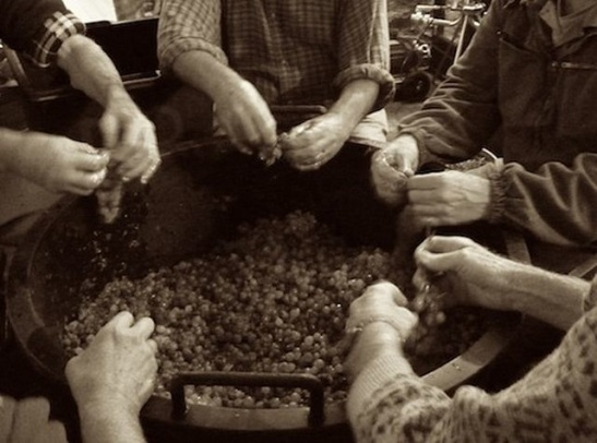Sciacchetrà wine making is a long standing tradition in Cinque Terre.  Photo courtesy of Wikipedia Commons.